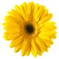 Биотор за цветя Тера Органика