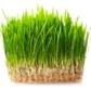 Биотор за трева Тера Органика